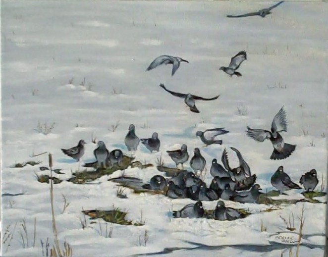 Le bain des pigeons